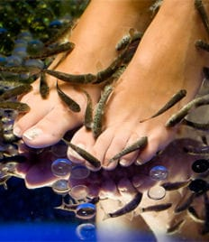 Приятно и полезно! Fish-пилинг (пилинг рыбками) ног в салоне фиш-пилинга «Аквилла» со скидкой 73%